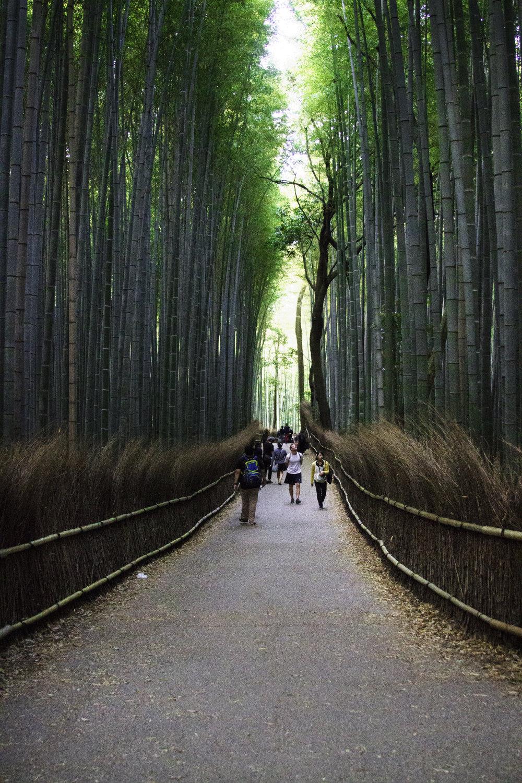 Bamboo Road.jpg