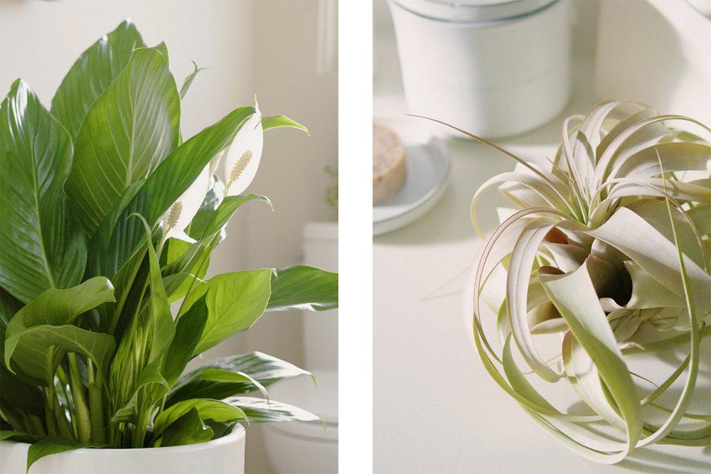 bathroom-plants-mosaic-2 (1).jpg