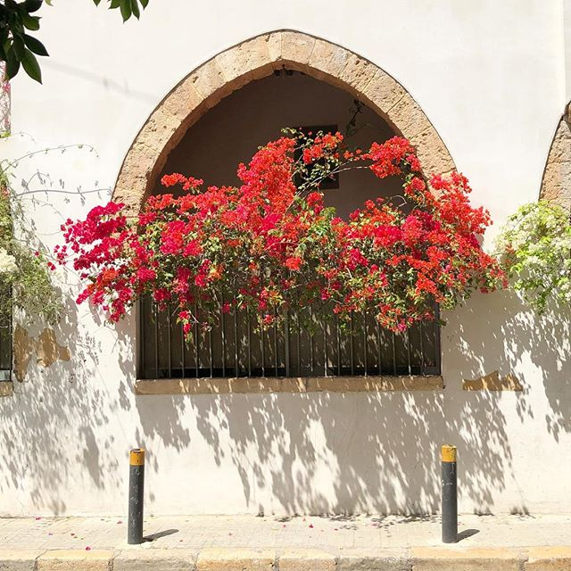 Love from the streets of #Beirut #lebanon #flowers #itsfriday #texture #urbanlandscape #middleeast #red #fridayfeeling