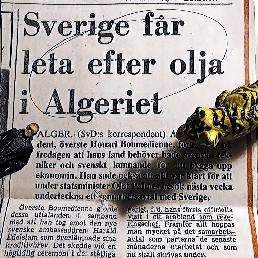 Miniaron och En Svensk Tiger läser om Sveriges oljeäventyr i Algeriet.