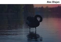 alex-blajan-159378-small.jpg