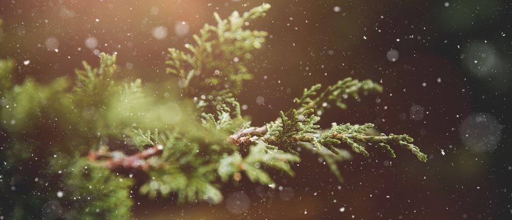 winter branch.jpg