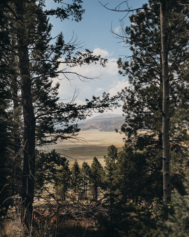 Coyote Call trail overlooking Valles Caldera in the Jemez. A gentle meadowy hike with beautiful views.