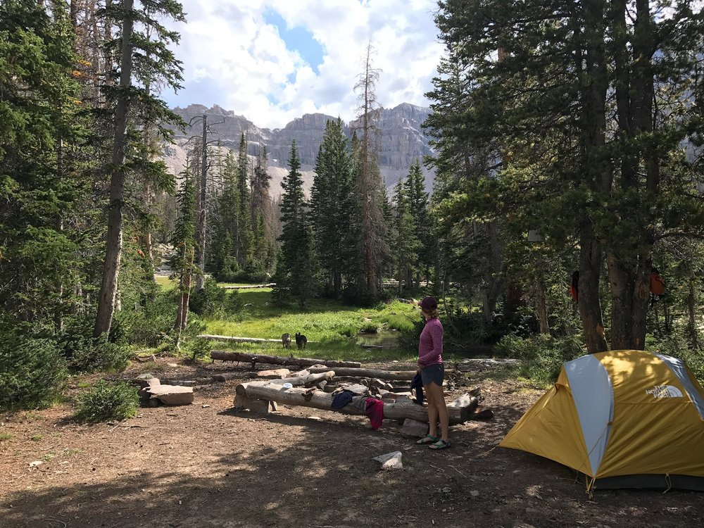Already made natural benches, a rock fire pit, safe distance from the water's edge, tree coverage and flat surface for the tent. Oh and VIEWS. Yeah, this'll do.