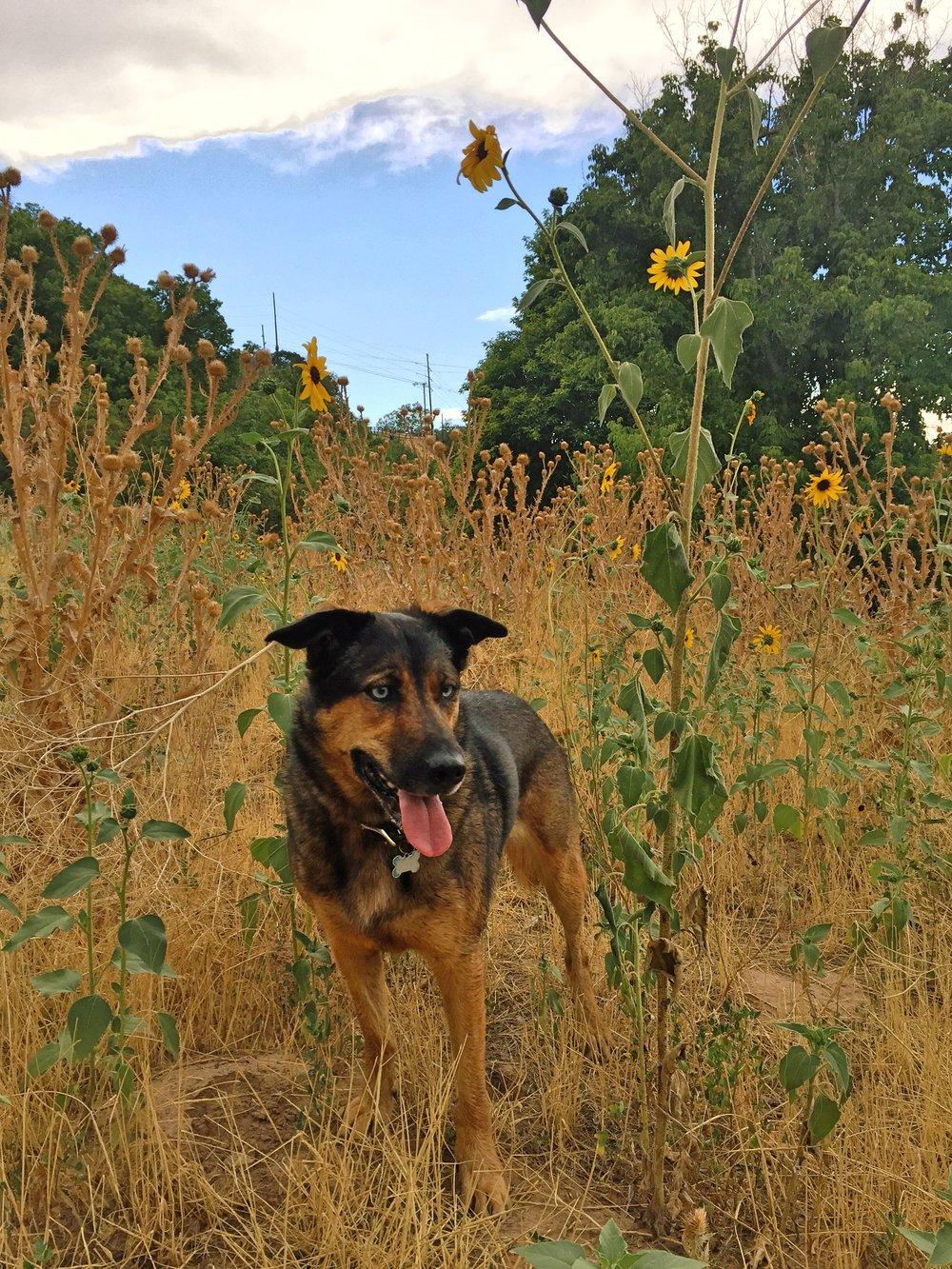 Osa flower Tanner PArk.jpg