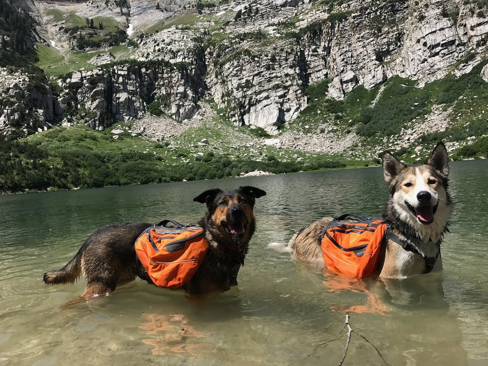The reason why the dogs only carry waterproof items. We will pack their packs with all the dishes, water bottles, ropes, sealed food items, first aid kit (which has a waterproof liner).