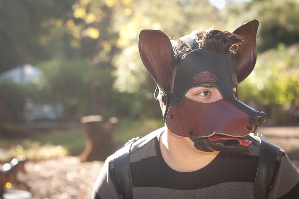 dog mask1.jpg