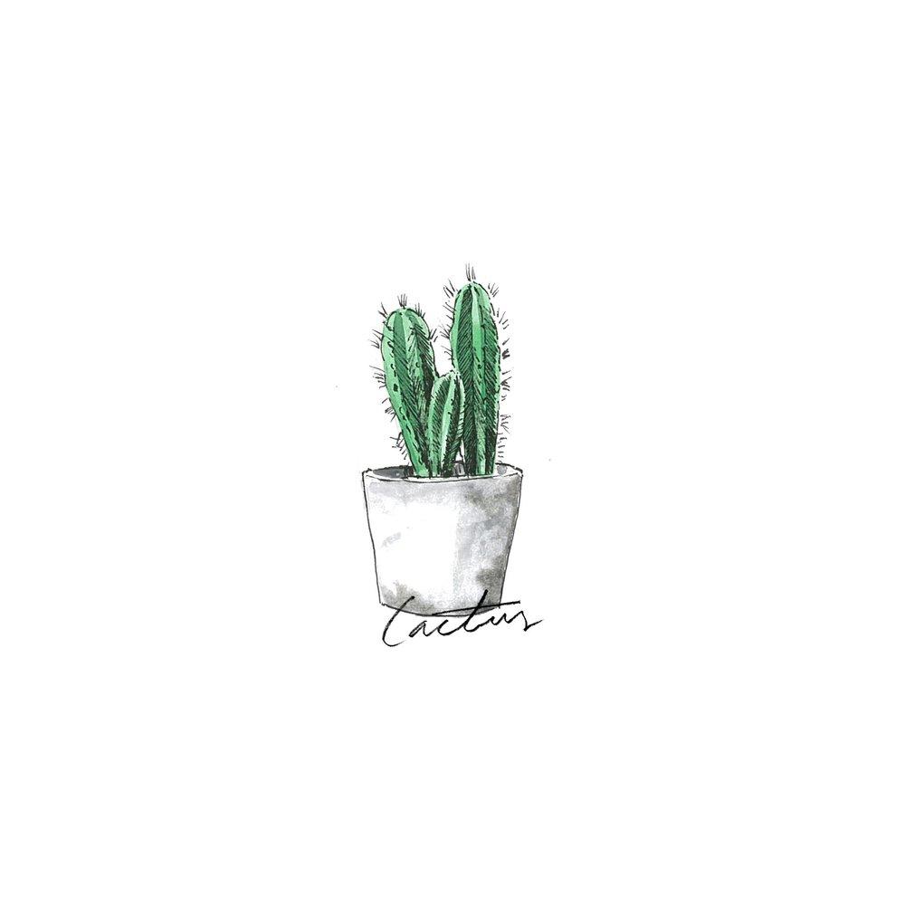 Cactus - Indoor Plants - The Beach People