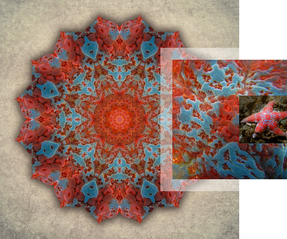 About-Mandalas_Leather-Star_1500w72r.jpg