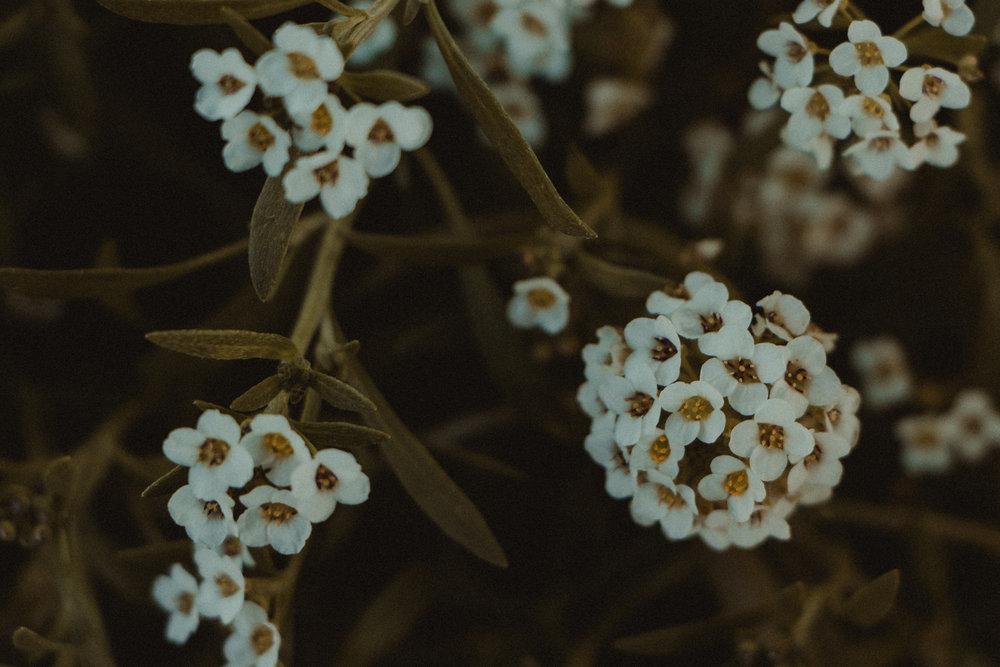arboretum-15.jpg