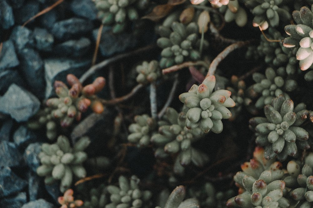 arboretum-12.jpg
