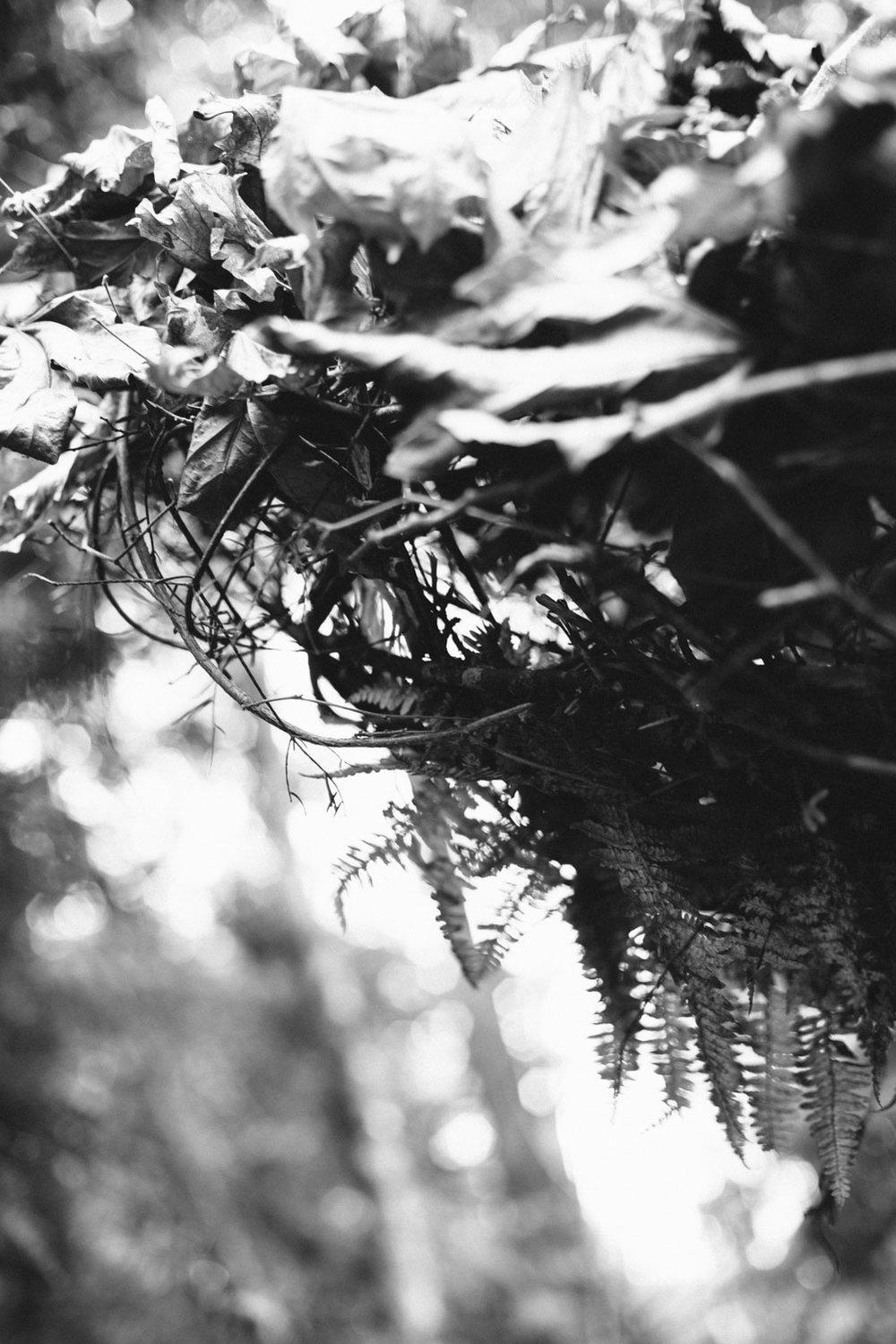 lummi_island_nest_-17.jpg