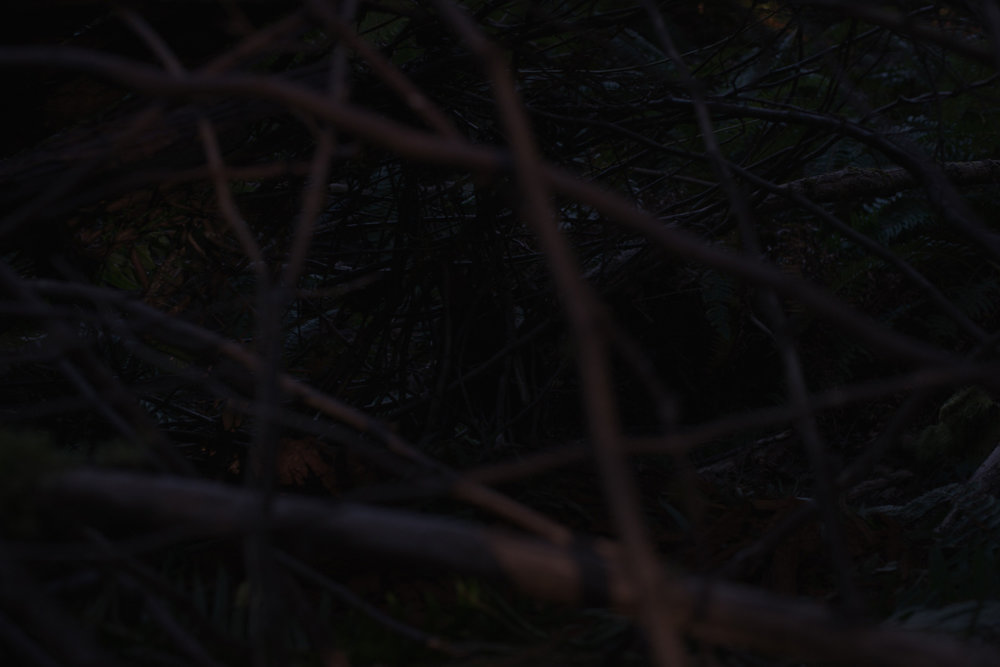 nest_heatherbrincko_2018-5.jpg