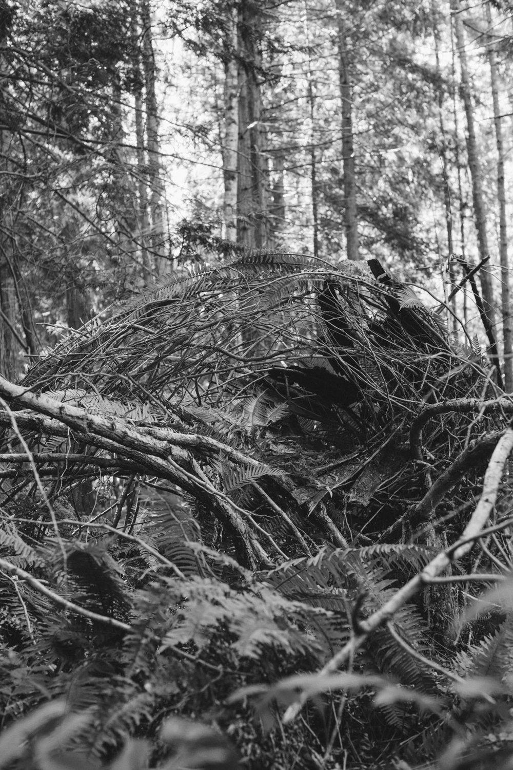 nest_heatherbrincko_2018-6.jpg