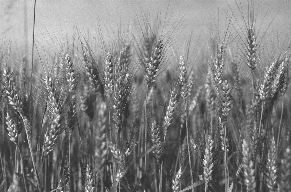 GrainSM.jpg