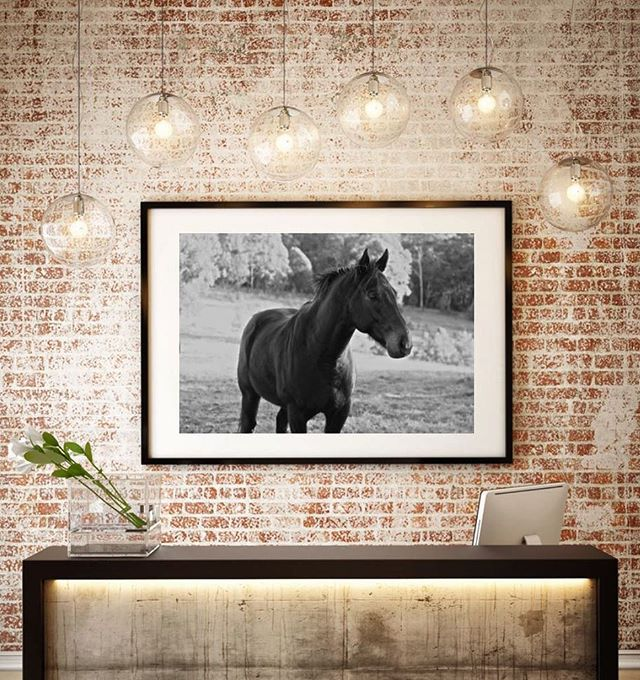 C H R I S T O P H E R for an exciting new Melbourne establishment #11horsescollection #11horses #thoroughbreds #horseracing #equineart #horselife #officeart  #australianart