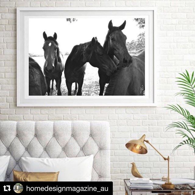R U P E R T for @homedesignmagazine_au #11horsescollection #11horses #australianthoroughbred #horseracing #offthetrackthoroughbred #photography #art