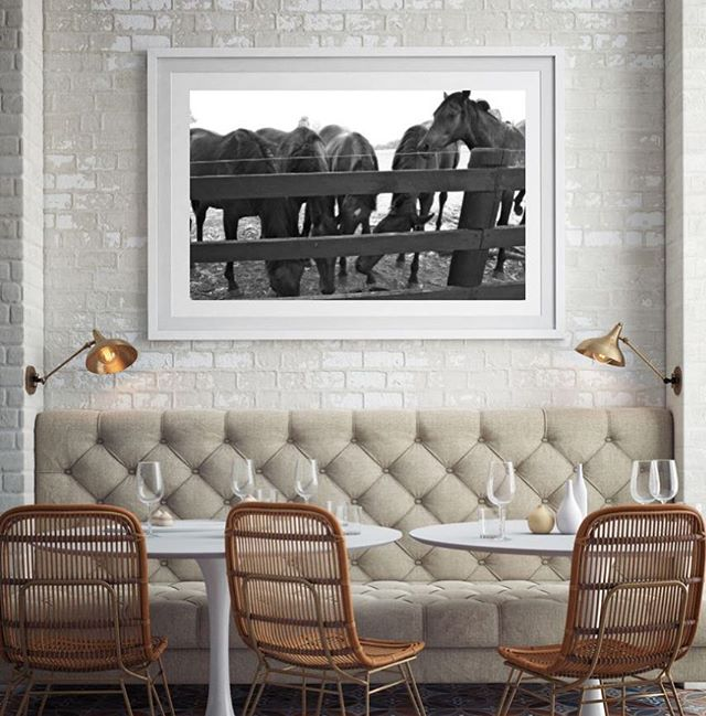 H E N R Y #11horsescollection #thoroughbred #photography #restaurant #wildlifephotogtaphy