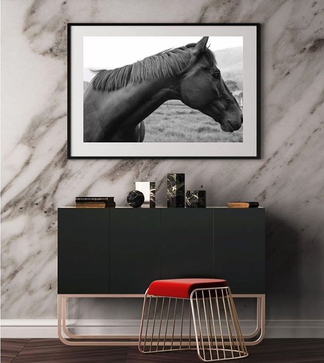 J A C K (collection two) #11horsescollection #thoroughbredsofinstagram #horsesofinstagram #wildlifephotography #blackandwhite