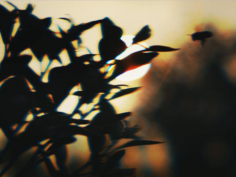 home-03_0830.jpg