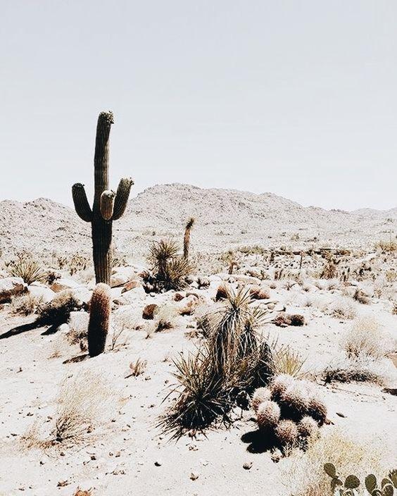 desertvibes-1.jpg