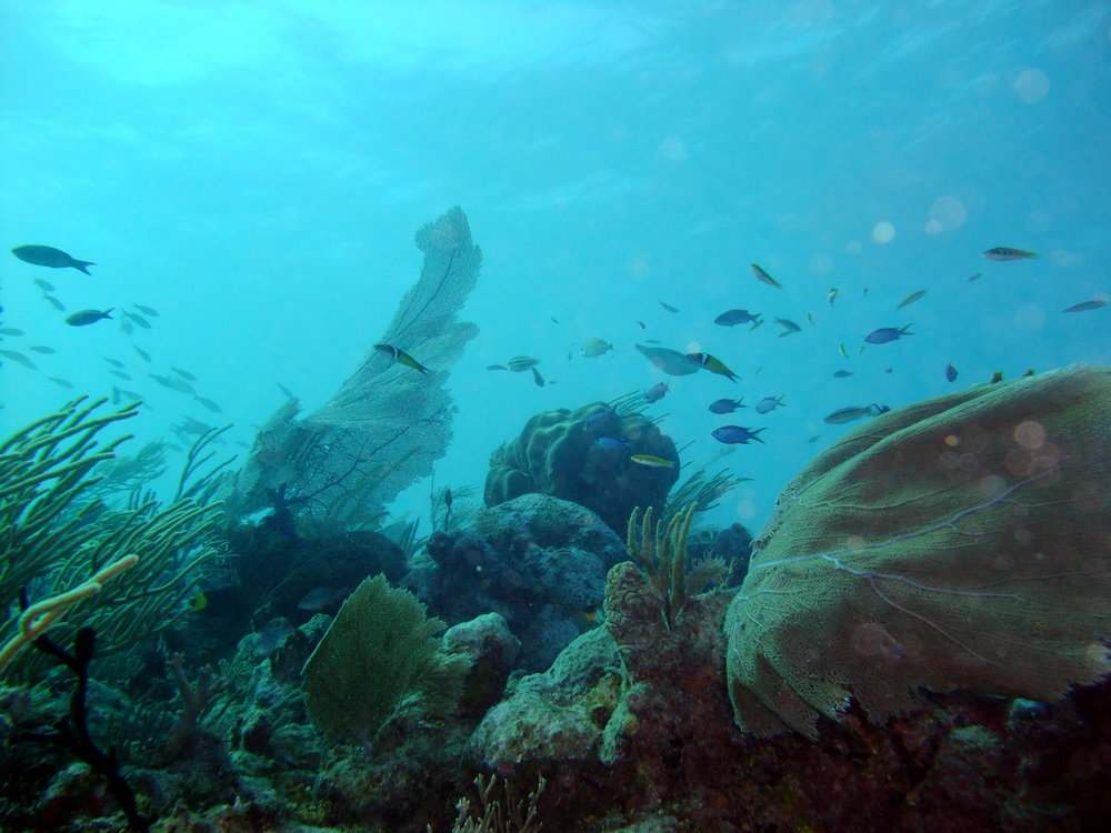 Daily dive Trips -
