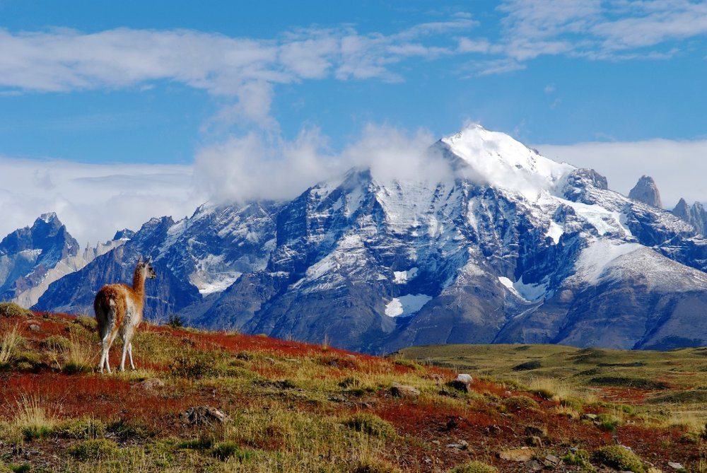 Wildlife and mountains at Explora Patagonia