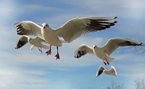 leader bird.jpg