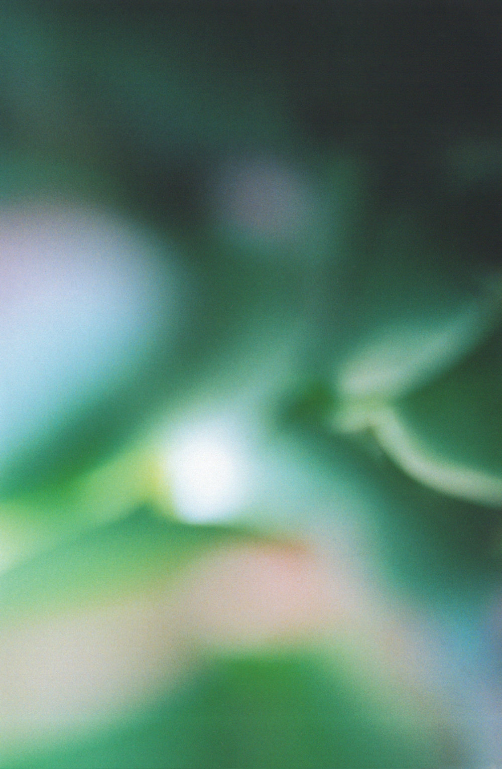 Photography-Closeup-Australia.jpg
