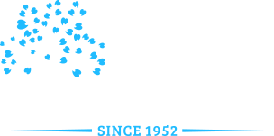 Dentist San Jose, CA | Willow Glen Family Dentistry | Drs. Massoud