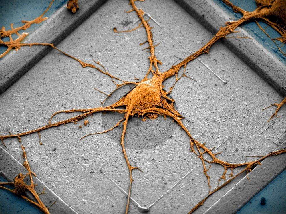 Neuron on a CNEA Pixel