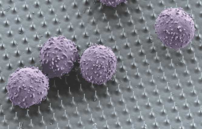 Immune Cells on Nanoneedles