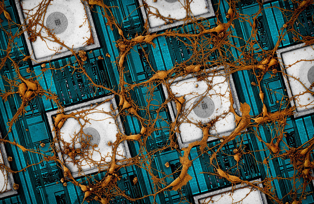 CNEA-Neuron Cover small.jpg