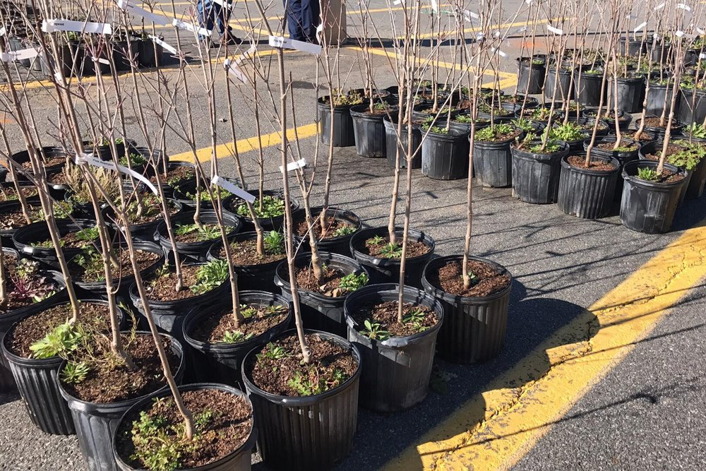 DOGWOOD TREE SALE - March 28 & 29, 2019