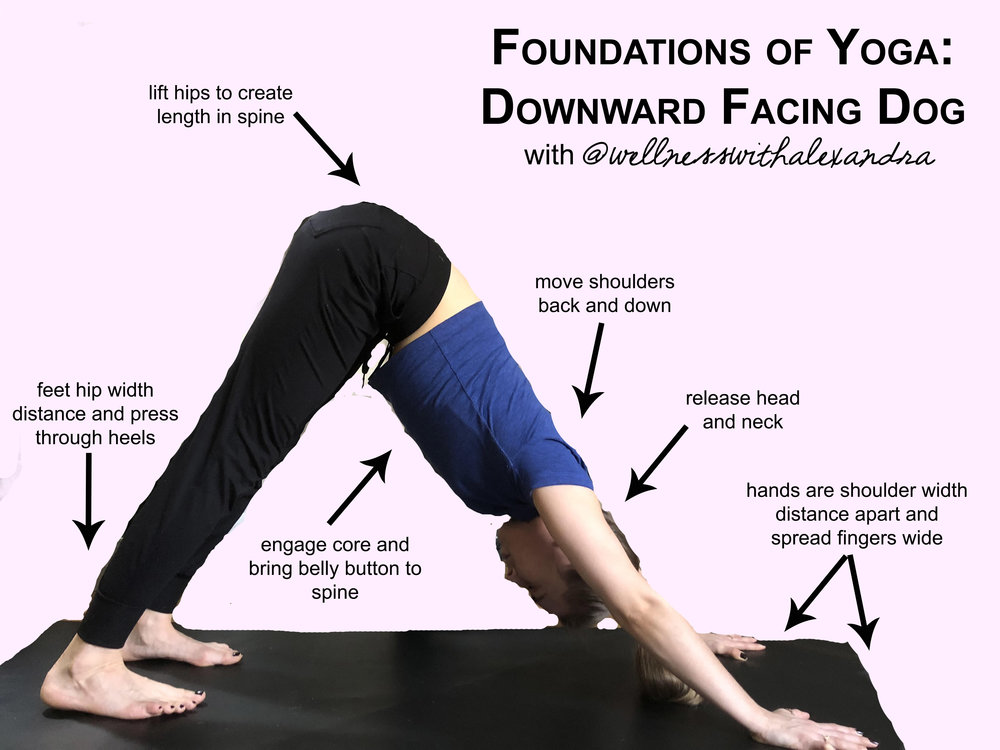 Foundations of Yoga - Downward Facing Dog - HOW TO.jpg