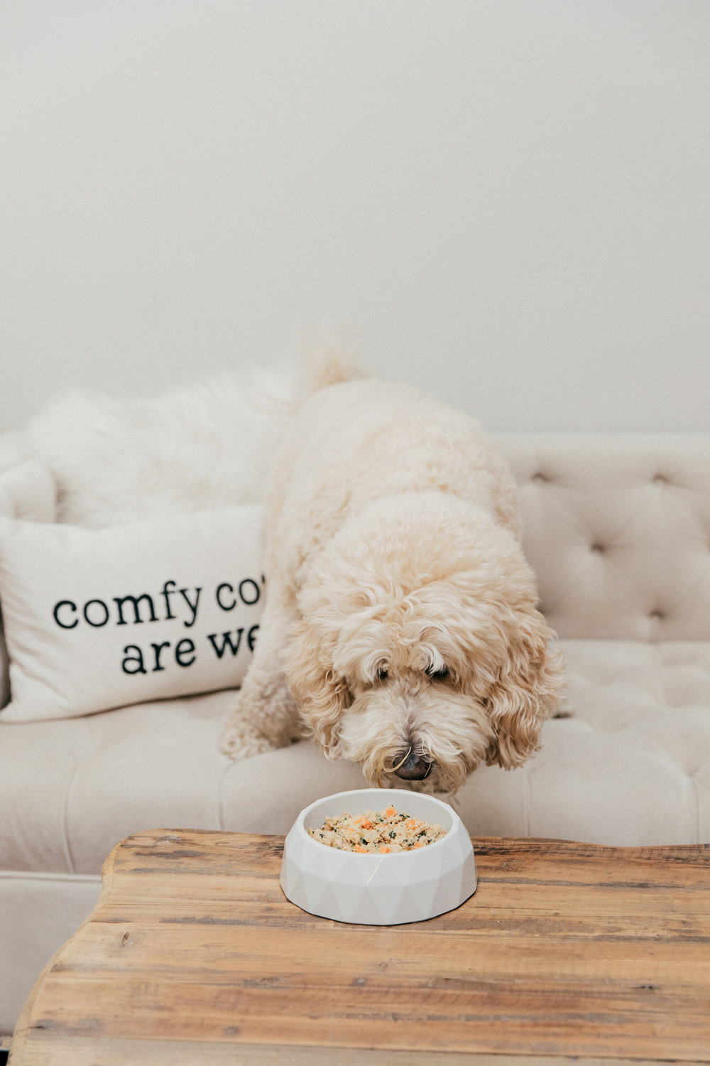 That Cozy Life - The Farmer's Dog