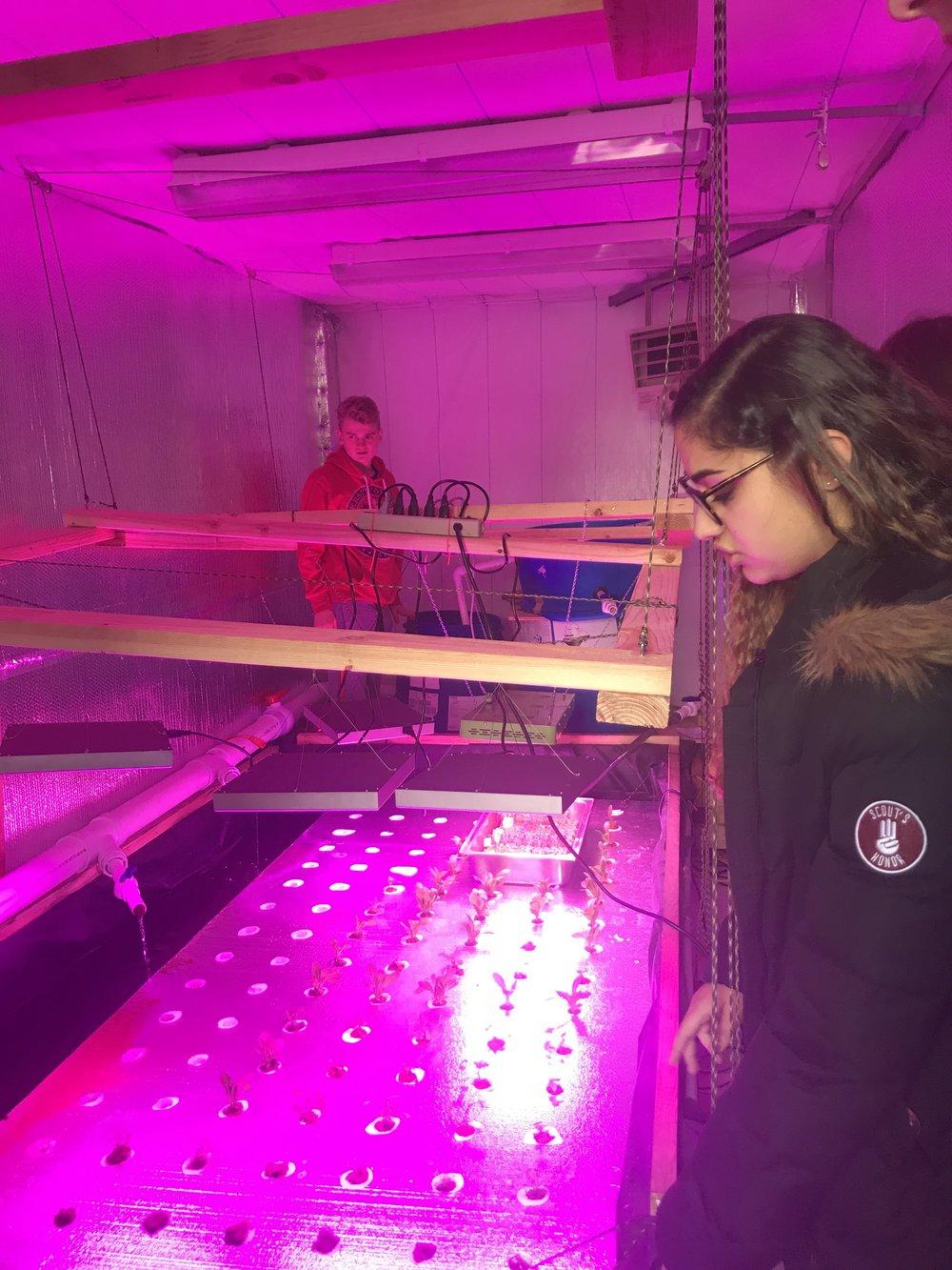 Aquaponics in action