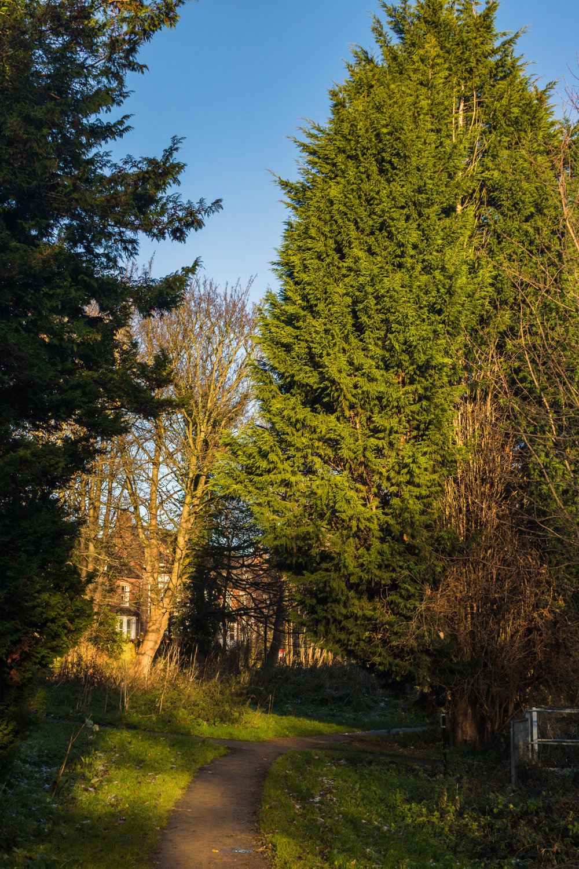 Grove Lane, Meanwood