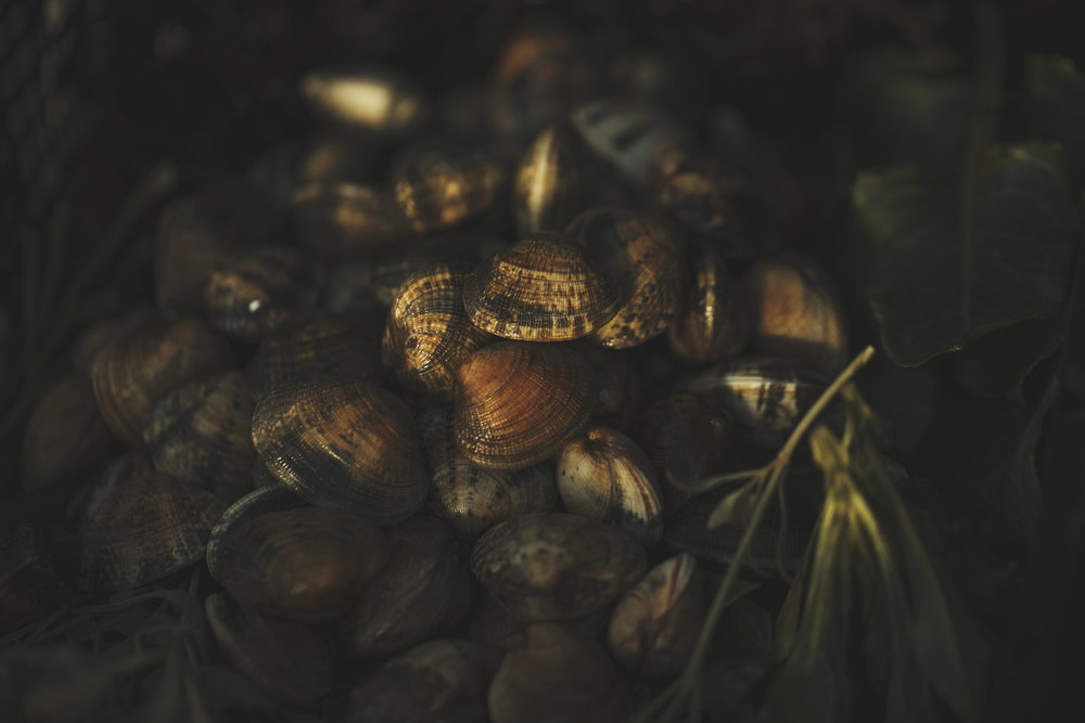clams in golden light ready for cooking on the beach bbq. chef simon rogan with land rover. food photography, still life