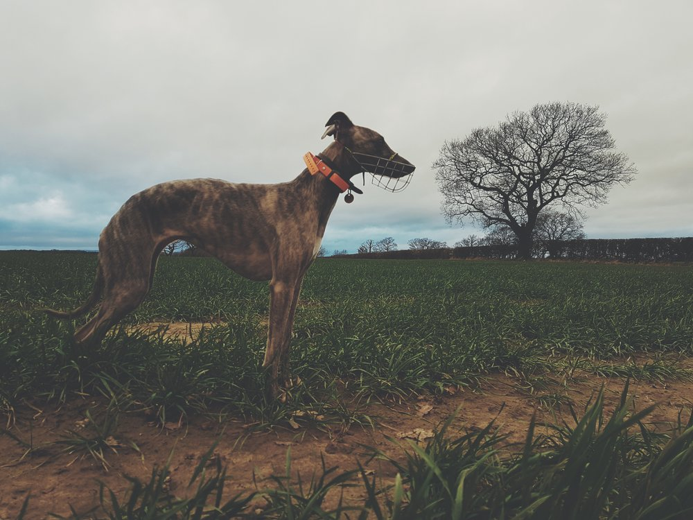 Animal Photographer in Yorkshire and London Lifestyle Photography