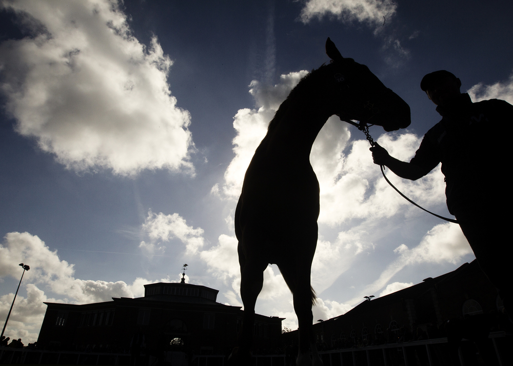 Tattersalls Bloodstock Auction photography by Matthew Lloyd