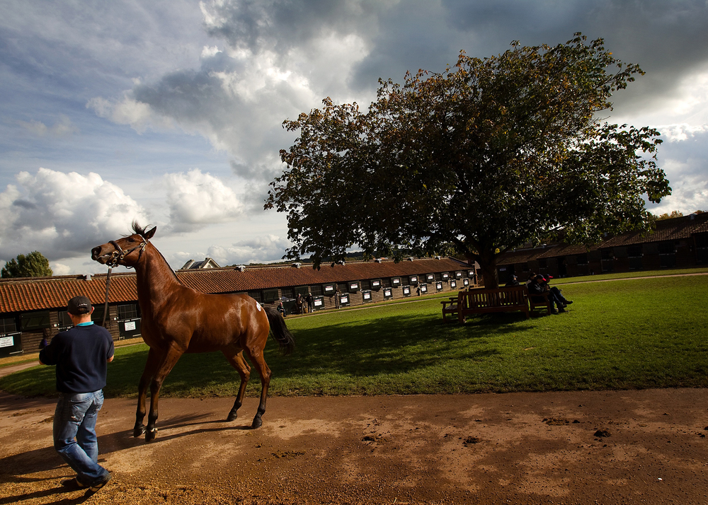 Horse_assignment_003.jpg