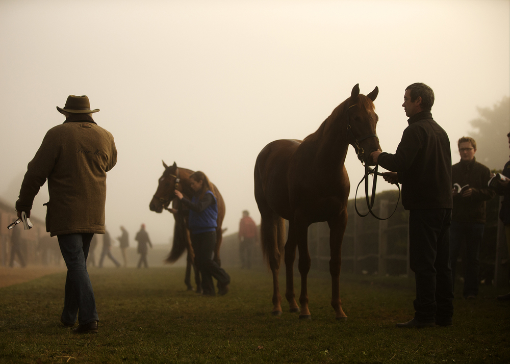 Tattersalls Bloodstock Auctions - newmarket. england