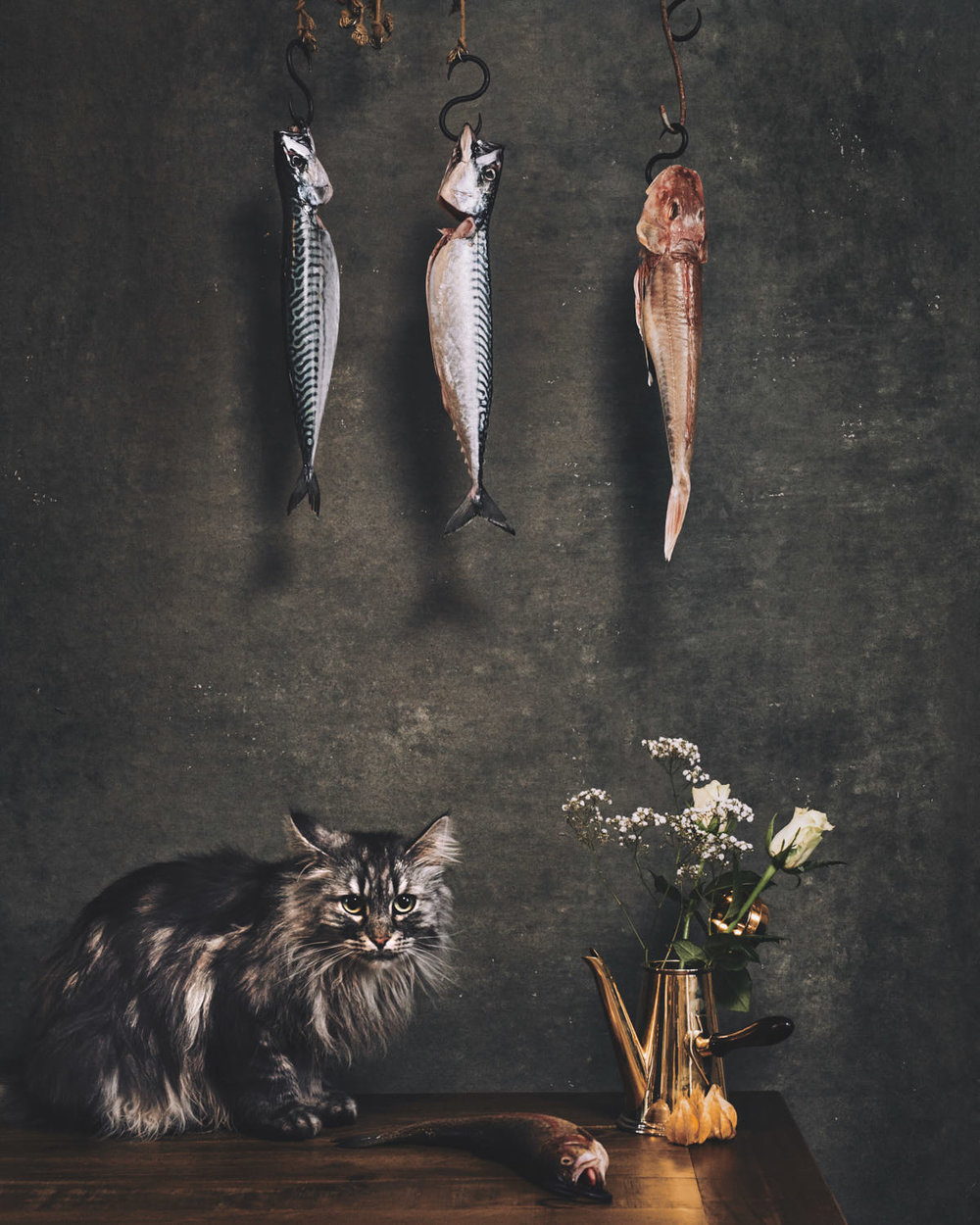 dutch-masters--of-cats-shot-by-matthew-lloyd 1.jpg