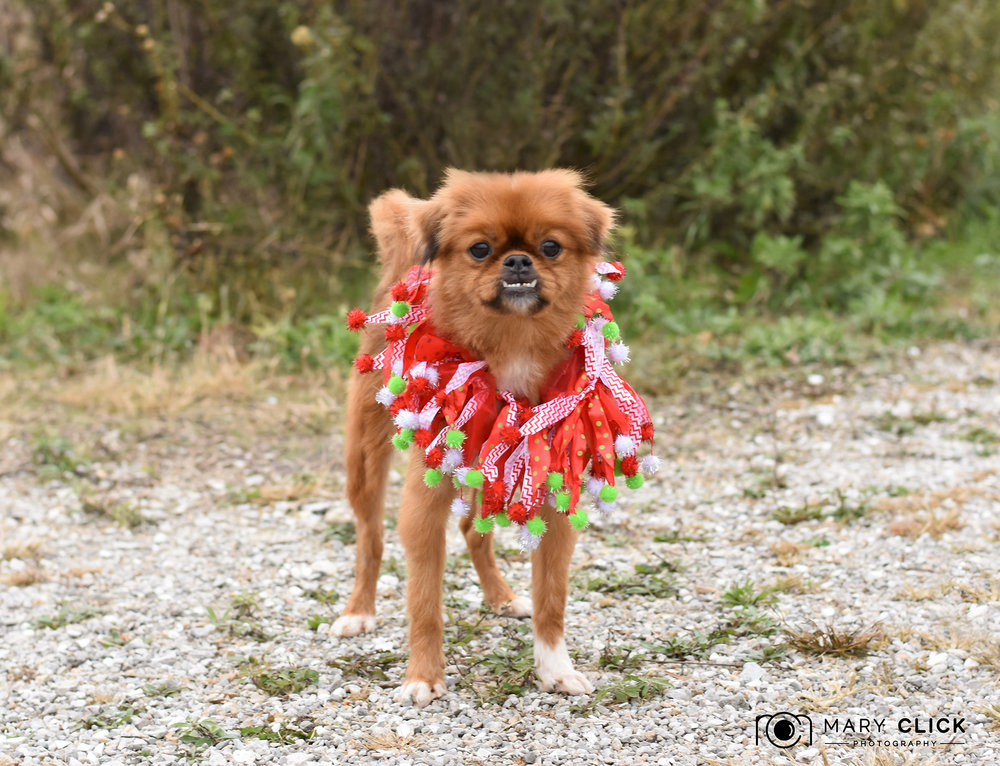 """Prancer"" is a sweet little boy who prances when he walks."