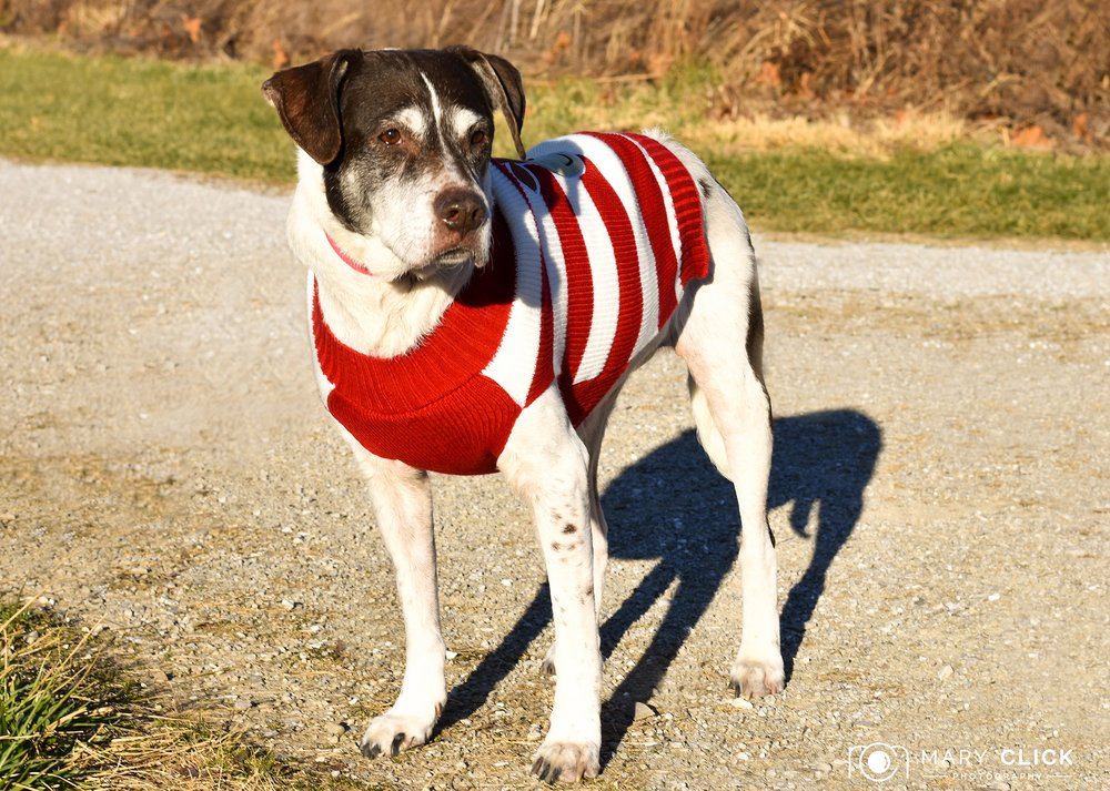 """Suki"" is a 9-year old female mixed breed."