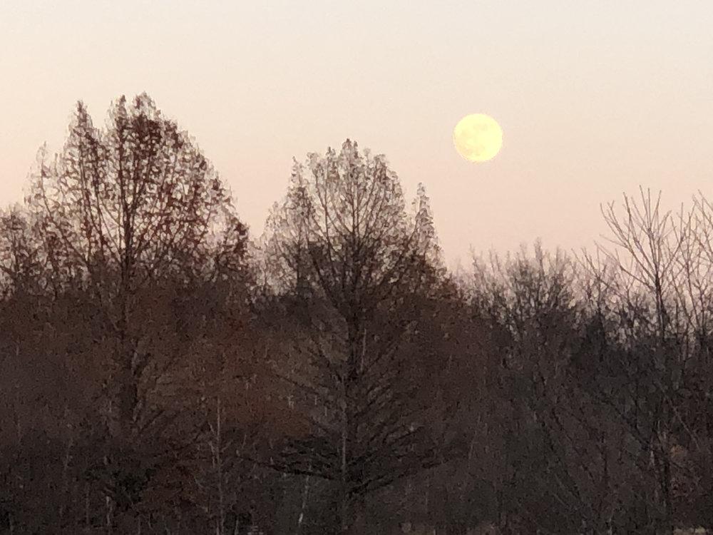 New Moon … New Beginnings