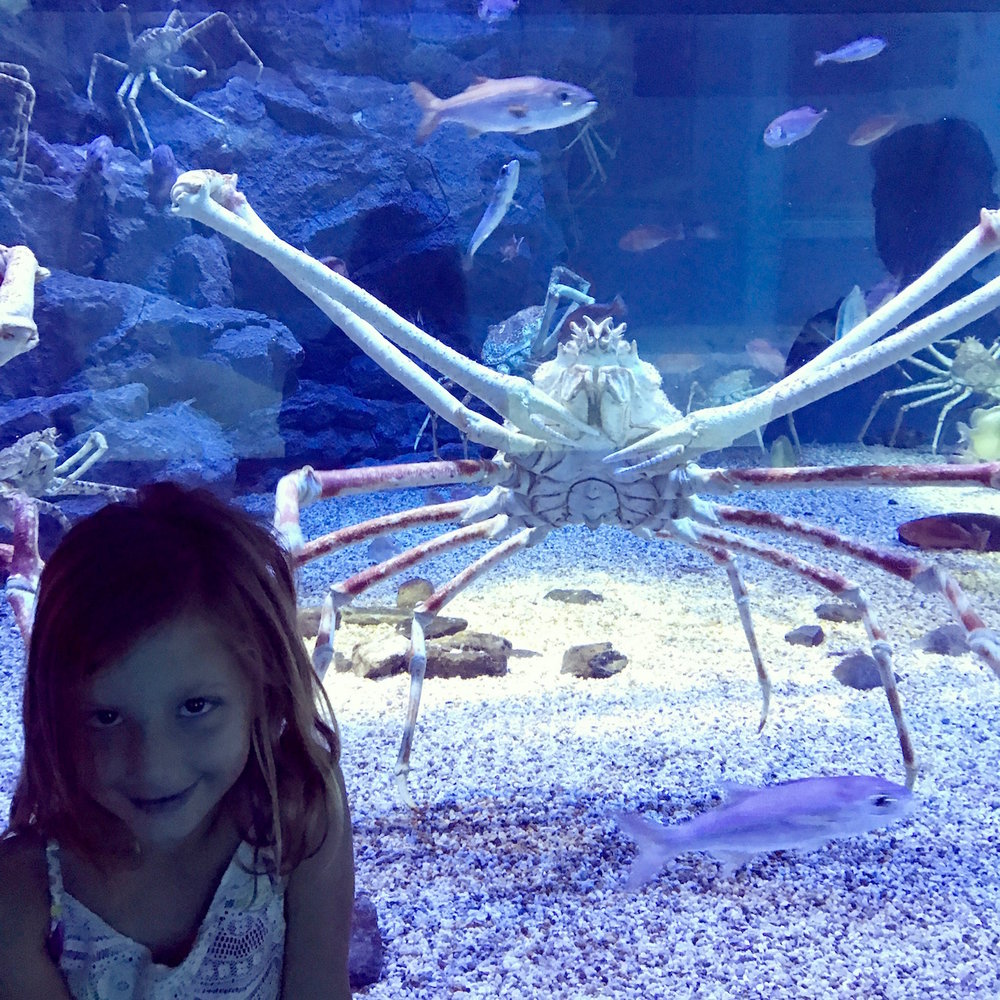 This crab loved Eden and seemed to pose purposely right behind her for this picture.