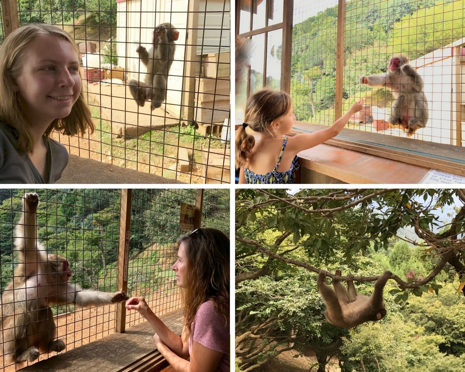 All of us enjoyed our up-close and personal interaction with the Japanese macaques.