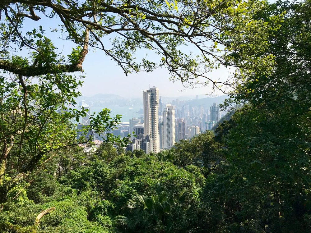 We took the Peak Tram up to Victoria Peak, and then we hiked down, down, down via the quiet and winding Old Peak Road.